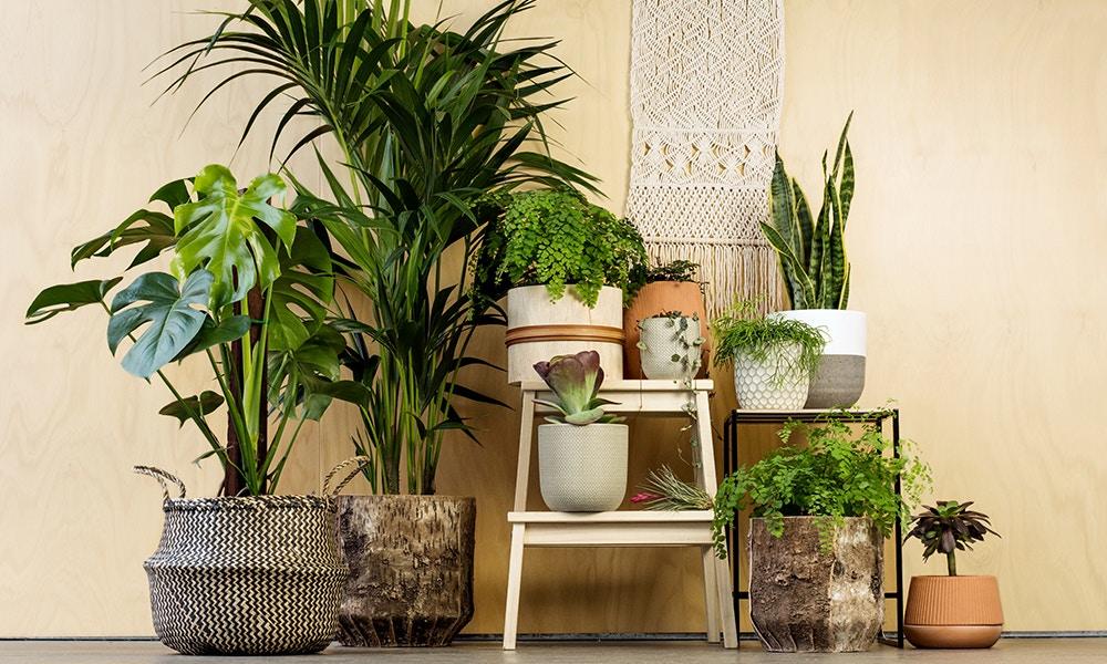 Indoor Plants for All Seasons: Beautiful Indoor Plants